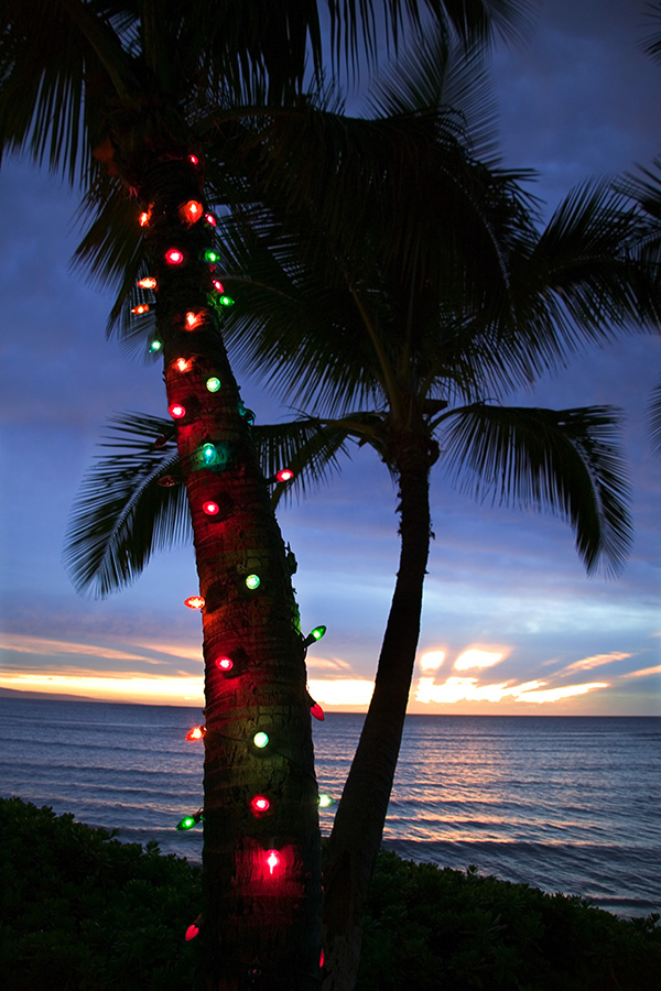 Palm trees lights